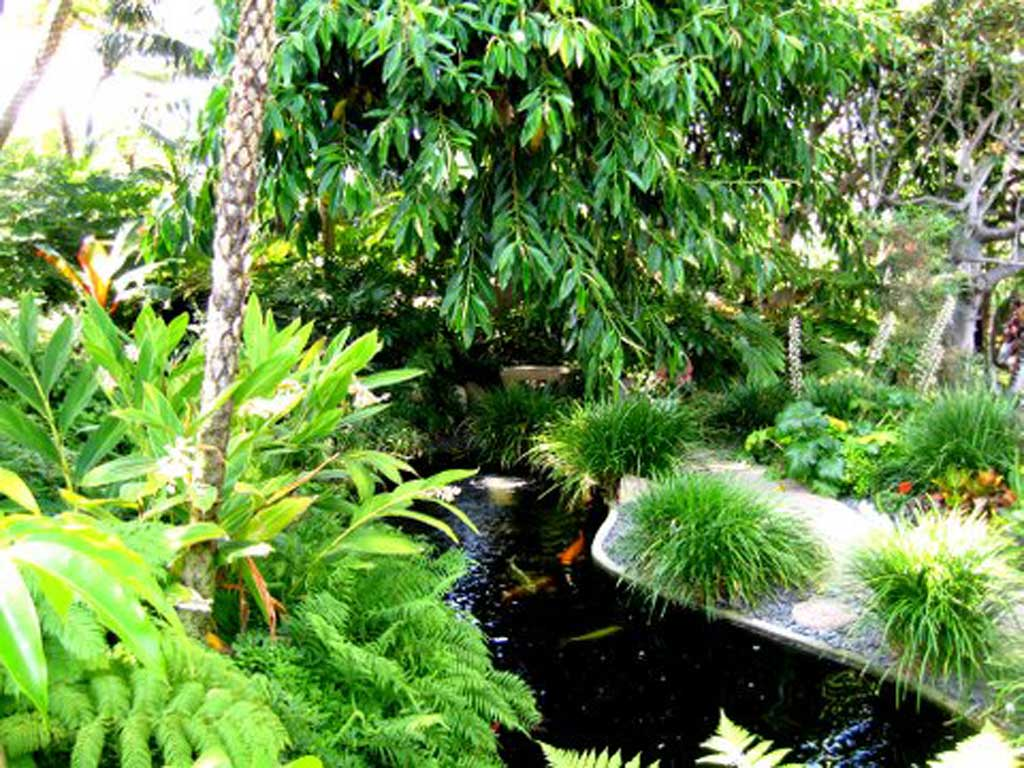 Free wallpaper desktop background images for Koi pond india